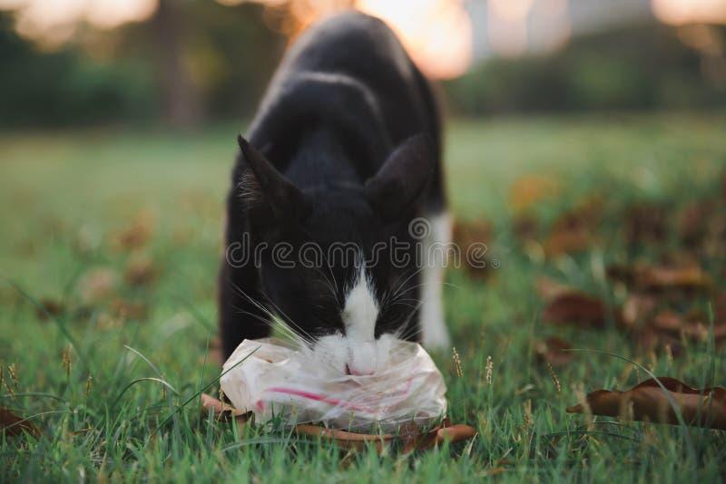 Katze, die Nahrung isst stockbilder