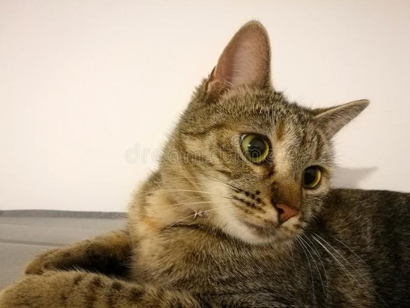 Katze, die oben schaut lizenzfreies stockbild