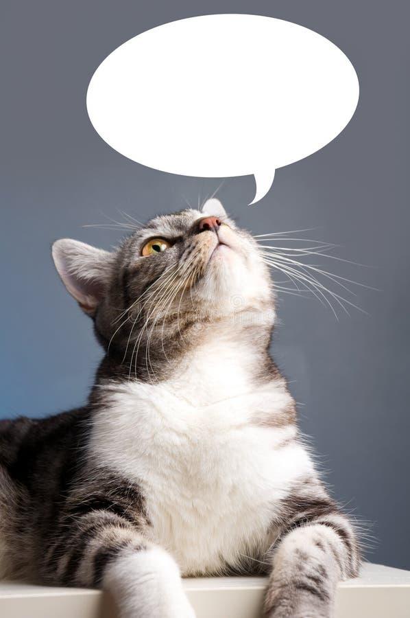 Katze, die oben schaut lizenzfreie stockfotos