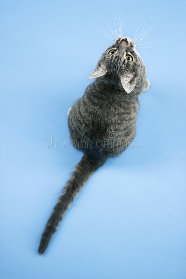 Katze, die oben schaut. lizenzfreie stockfotos
