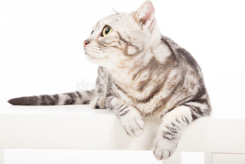 Katze, Die Oben Schaut Lizenzfreies Stockfoto
