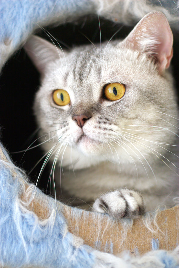 Katze, die von seinem Taubenschlag überwacht stockbilder