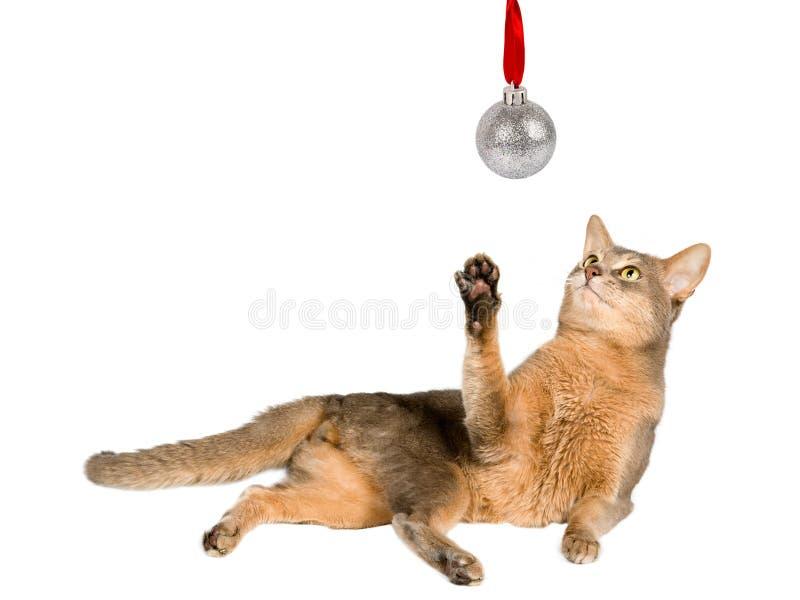 Katze, die Weihnachtskugel betrachtet lizenzfreies stockbild