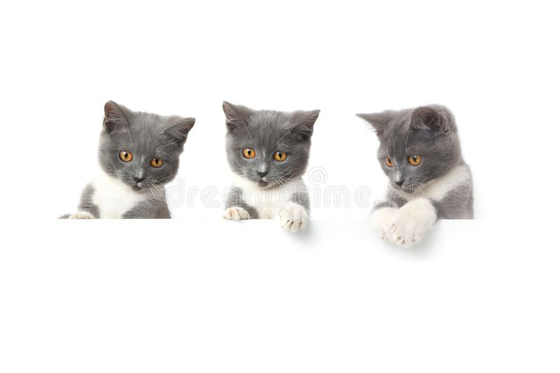 Katze drei lokalisiert auf wei?em Hintergrund stockfotos