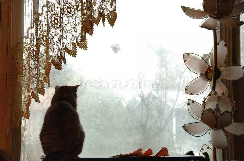 Katze durch Fenster stockbild