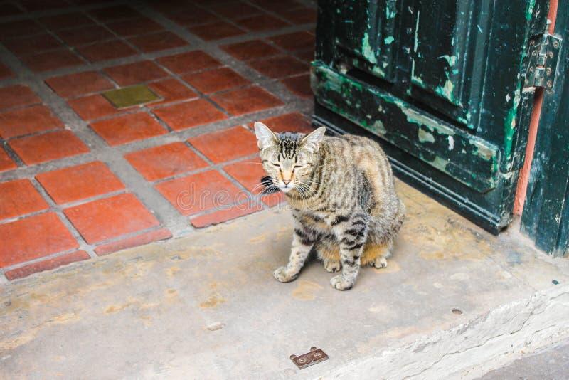 Katze in ein Haus-sitzenden Haustier-Katzen stockbild