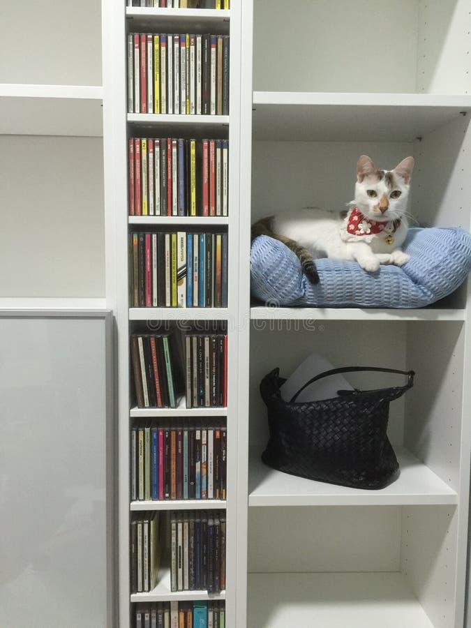 Katze in einem Bücherregal lizenzfreie stockfotografie