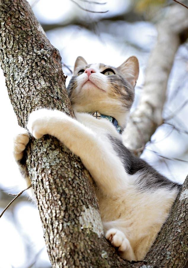 Katze in einem Baum, der auf ein Glied hält stockbild