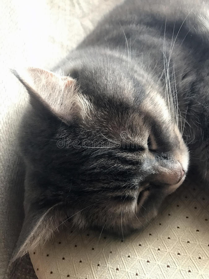 Katze in einem bequemen Stuhl zu Hause stockfoto