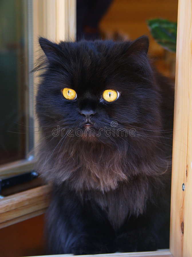 Katze in einem Fenster. stockbild