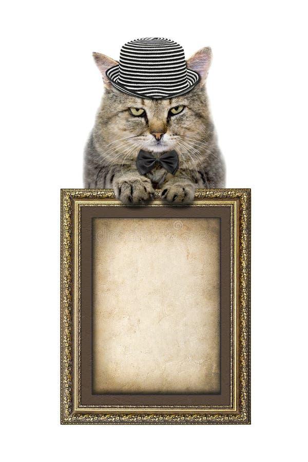 Katze In Einem Hut Und In Einer Schmetterlingsbindung Beruht Auf Dem ...