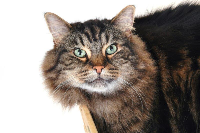 Katze in einem Kasten 2 lizenzfreie stockfotos