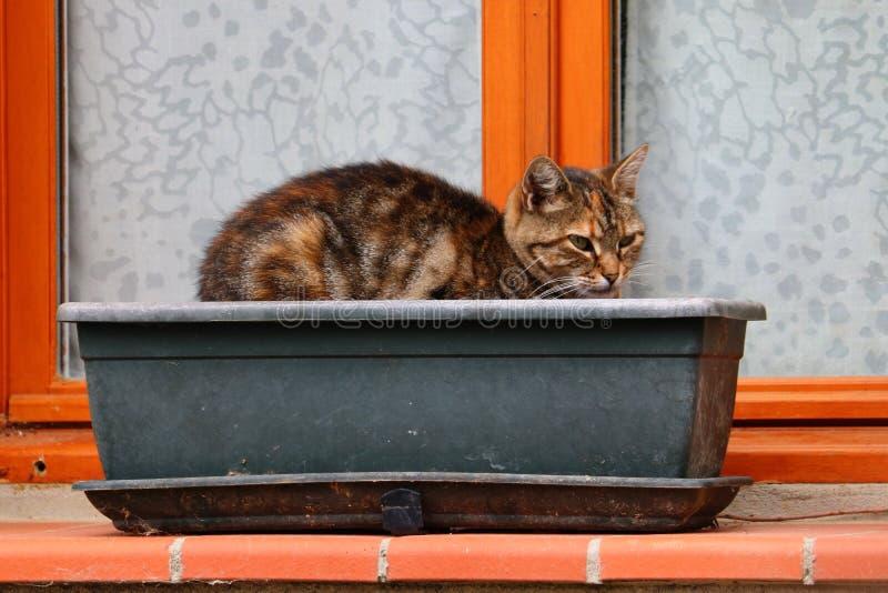Katze in einem Kasten lizenzfreie stockfotos