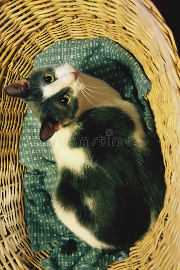 Katze in einem Korb lizenzfreies stockfoto