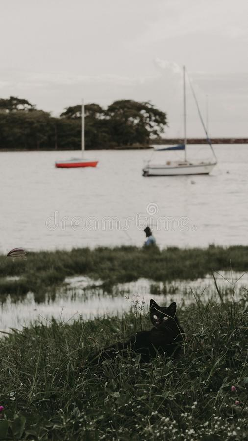 Katze in einem Strand lizenzfreie stockbilder