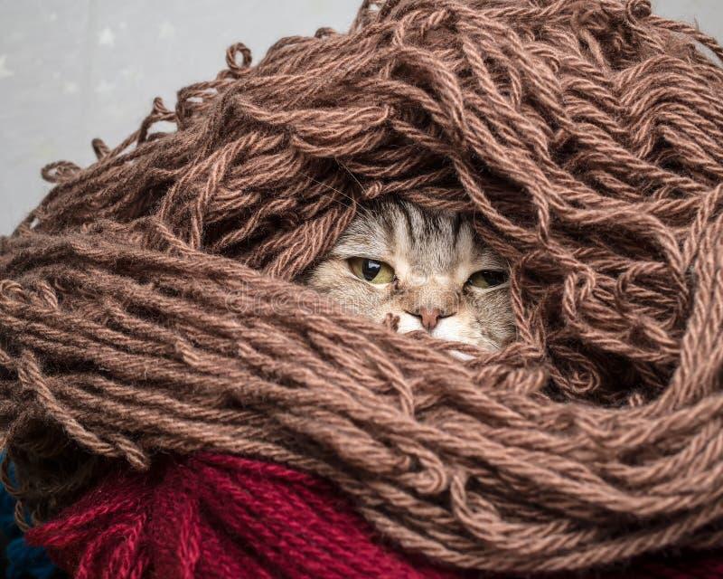 Katze in einem woolen Garn des Stapelthreads lizenzfreie stockfotografie