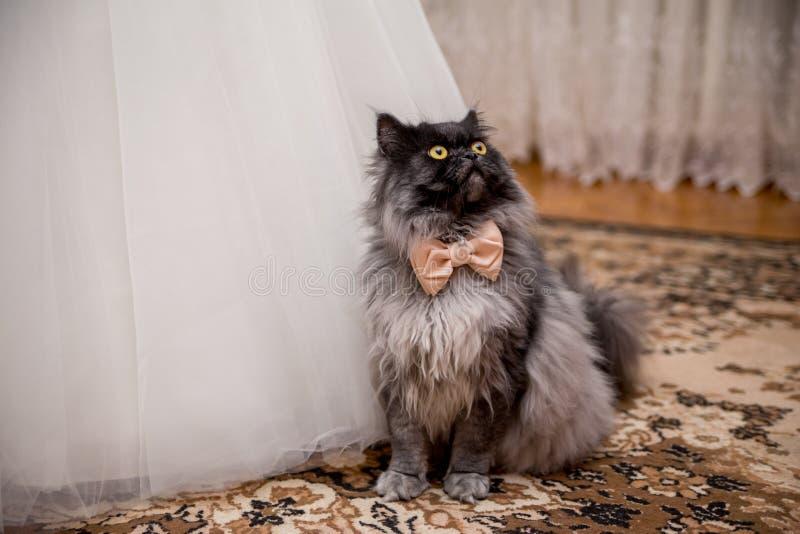 Katze in einer Fliege nahe dem Hochzeitskleid der Braut lizenzfreie stockfotos