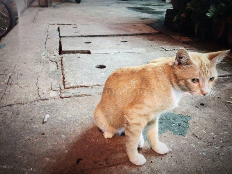 Katze entlang der Straße stockfotografie