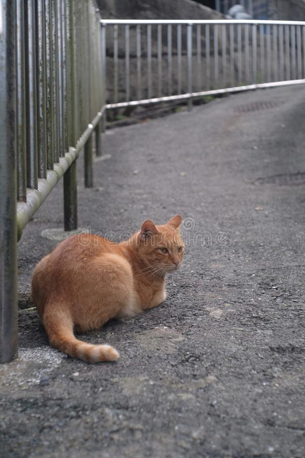 Katze, Fauna, S?ugetier, klein zu mittelgro?en Katzen