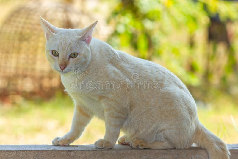 Katze Freude an seinem Leben im Freien und weiche Konzentration stockfoto