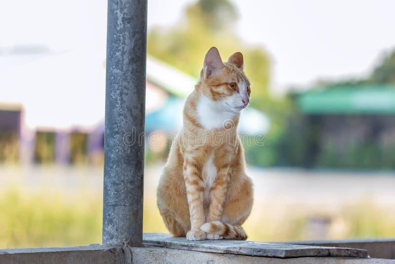 Katze Freude an seinem Leben im Freien und weiche Konzentration stockbild
