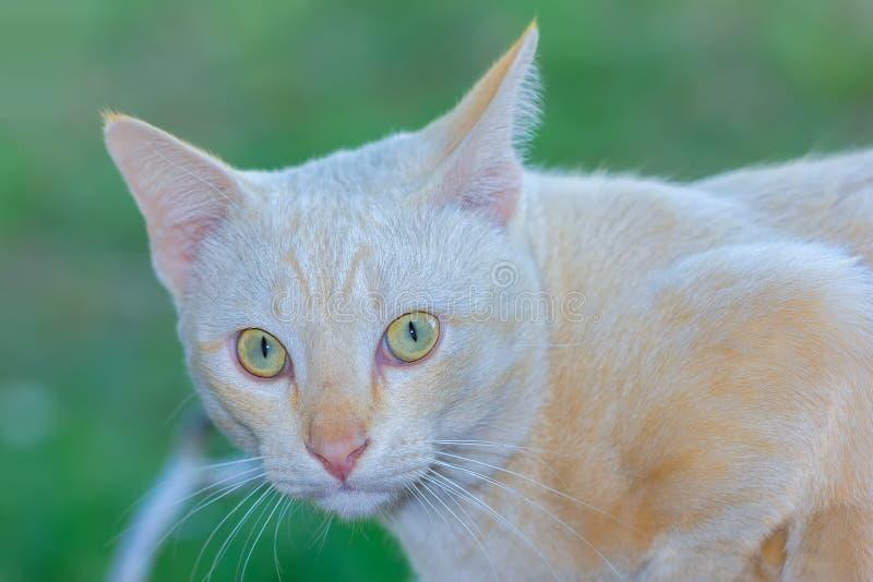 Katze Freude an seinem Leben im Freien und weiche Konzentration stockbilder