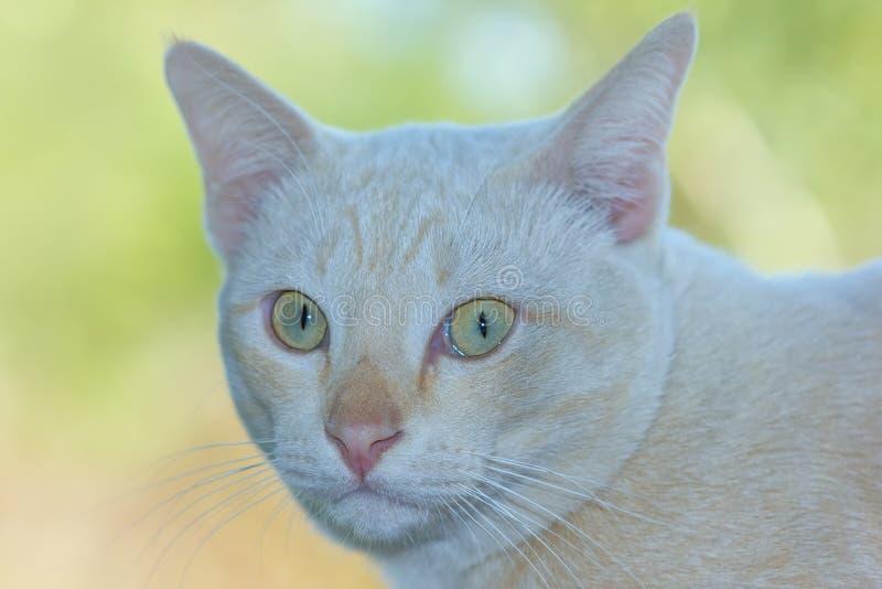 Katze Freude an seinem Leben im Freien und weiche Konzentration stockfotografie