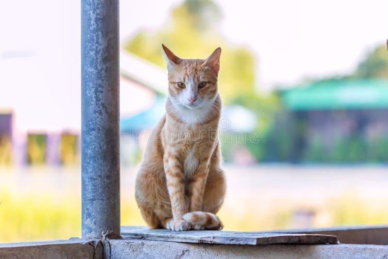 Katze Freude an seinem Leben im Freien und weiche Konzentration lizenzfreies stockbild
