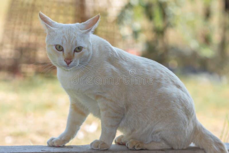Katze Freude an seinem Leben im Freien und weiche Konzentration lizenzfreie stockbilder