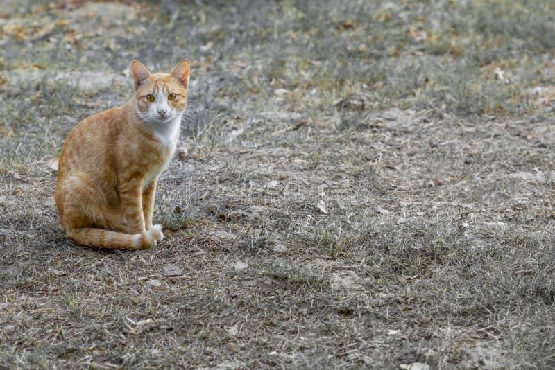 Katze Freude an seinem Leben im Freien und weiche Konzentration stockfotos