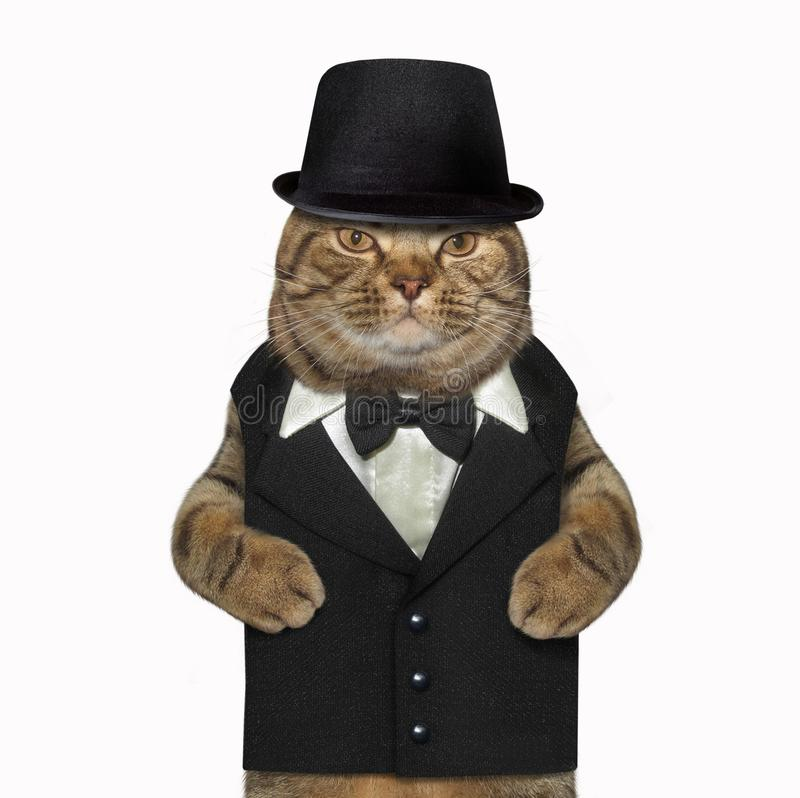 Katze gekleidet als Herr stockfotos
