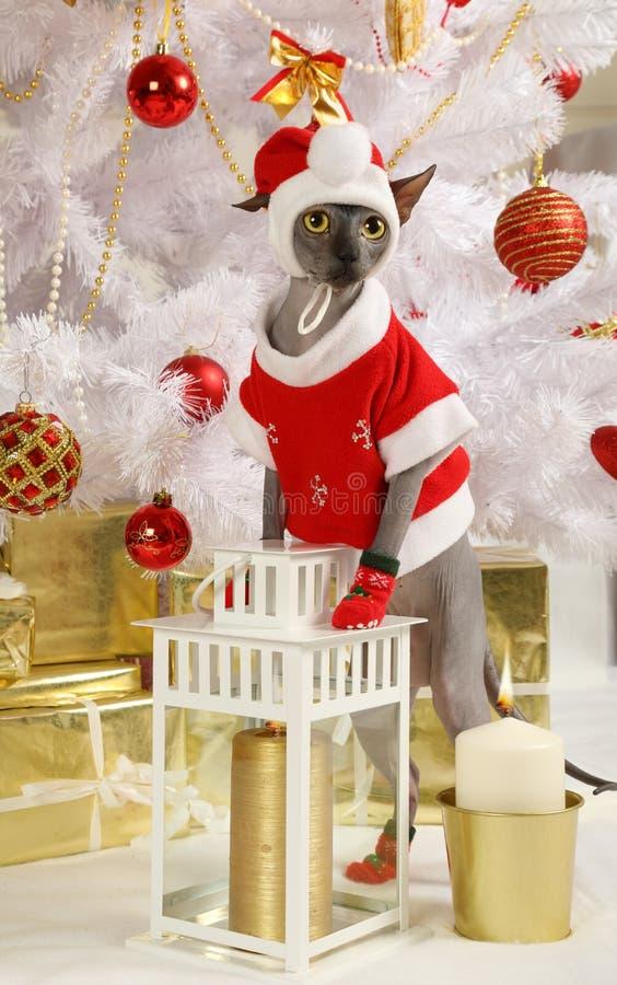 Katze gekleidet in einem Weihnachtskostüm lizenzfreies stockfoto
