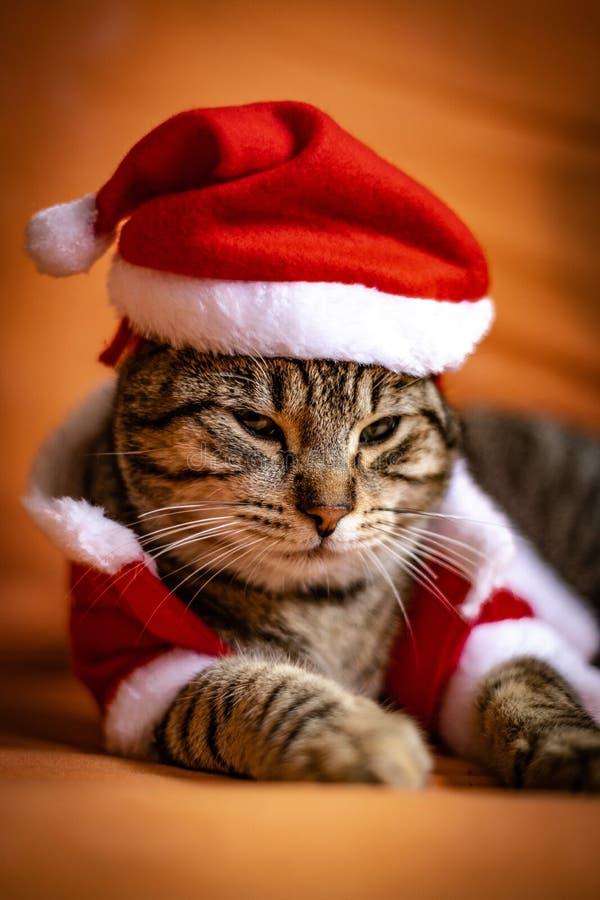 Katze gekleidet herauf als Weihnachtsmann lizenzfreie stockbilder