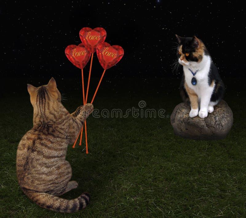 Katze gibt Blumenstrauß von Herzen stockfotografie