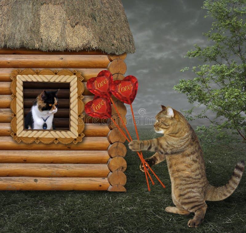 Katze gibt einen Blumenstrauß 2 stockfoto