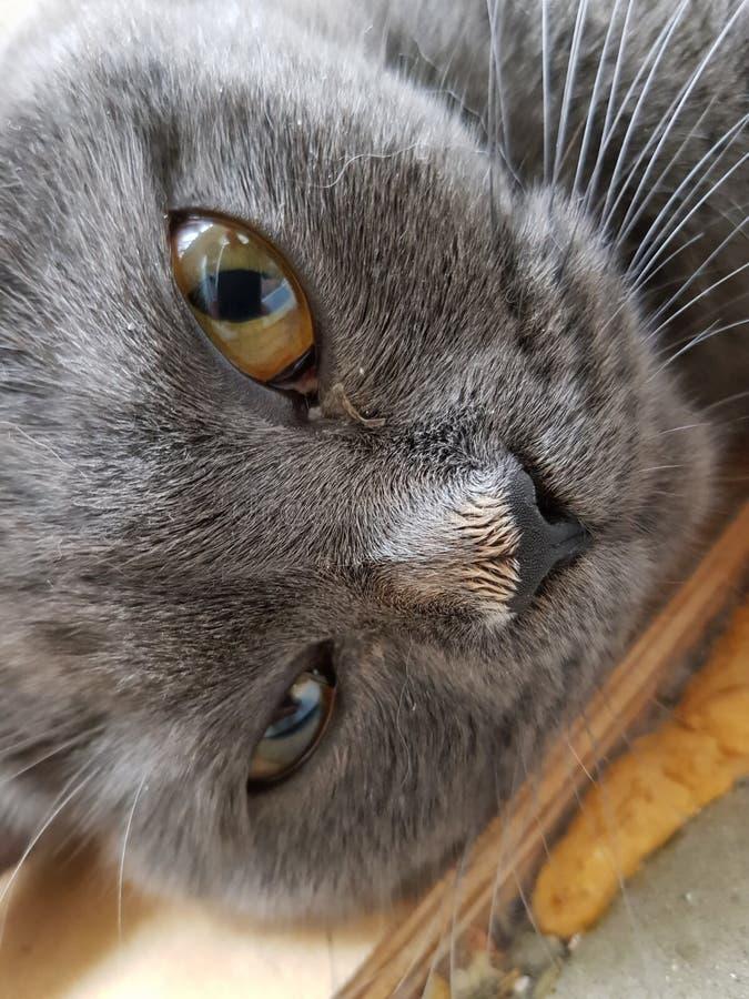 Katze hat das getan stockfotos