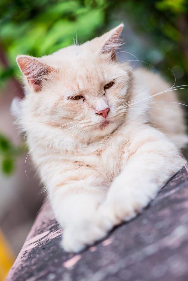 Katze Haustier und Tier stockfotografie