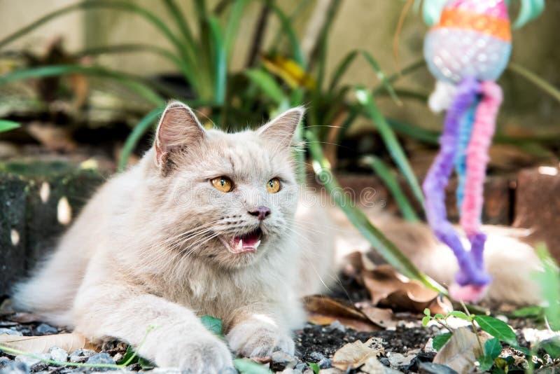 Katze Haustier und Tier stockfoto
