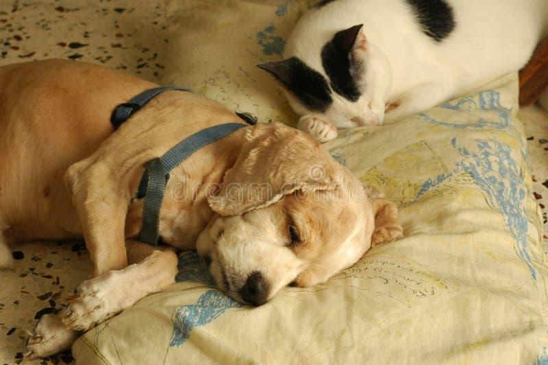 Katze-Hundeschlafen lizenzfreie stockfotos