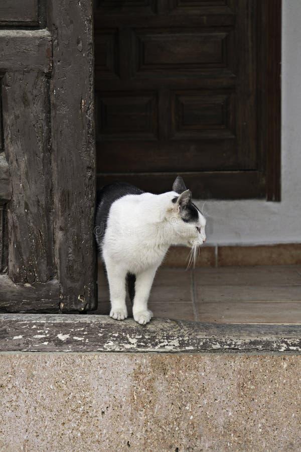 Katze im Eingang stockbilder