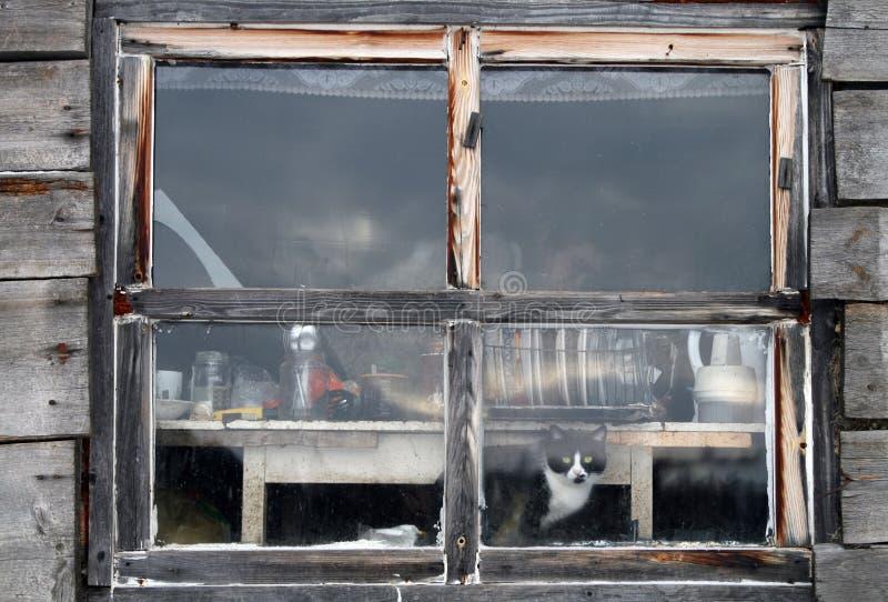 Katze im Fenster lizenzfreie stockfotos