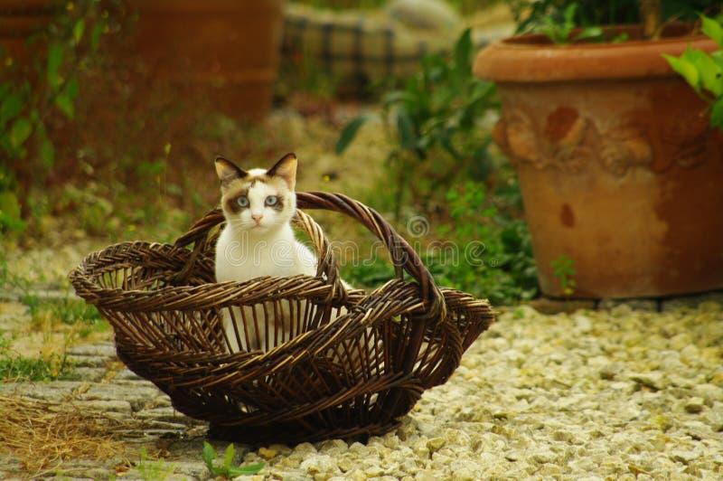 Katze im französischen Korb lizenzfreies stockbild