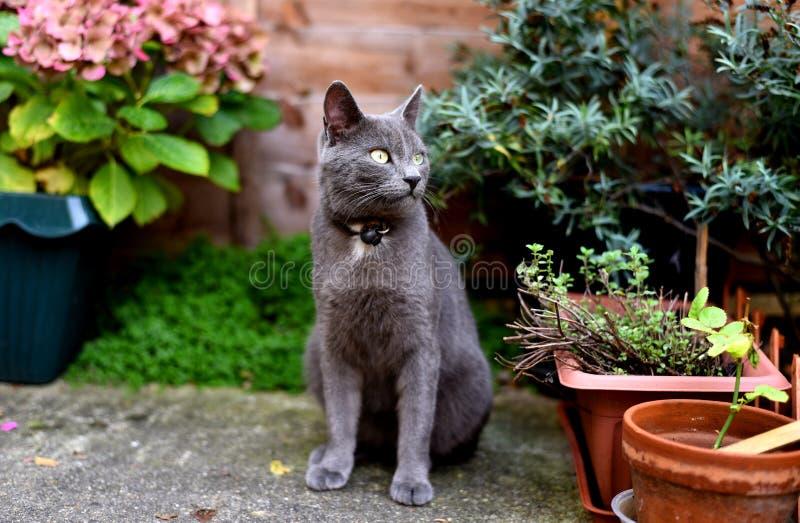 Katze im Garten lizenzfreie stockfotos