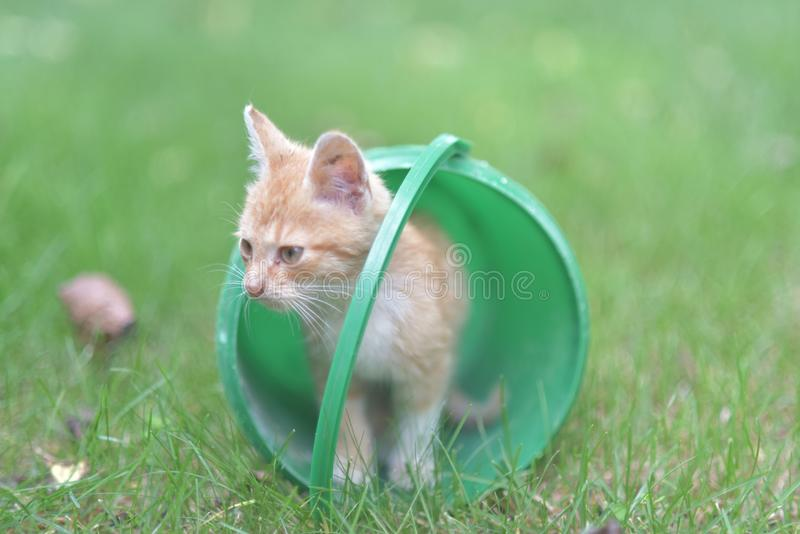 Katze im grünen Eimer lizenzfreies stockfoto