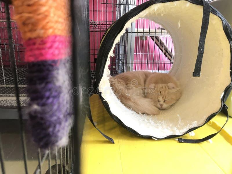 Katze im Käfig lizenzfreies stockfoto