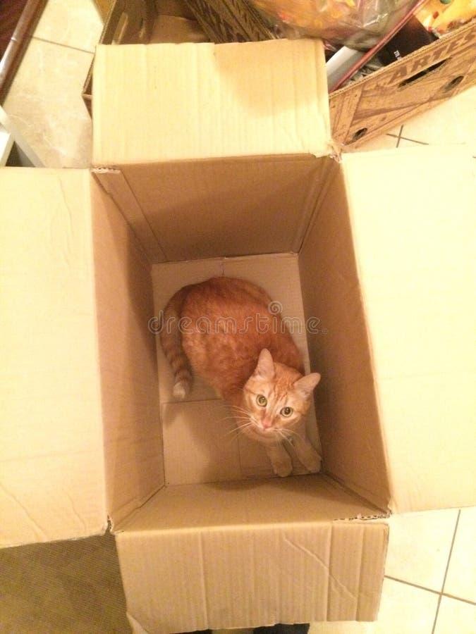 Katze im Kasten stockfotos