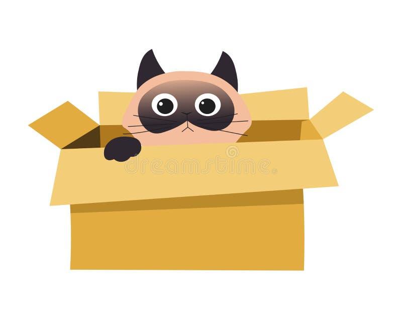 Katze im Kasten, der lokalisiertes Tier im Pappbehälter versteckt oder spielt stock abbildung