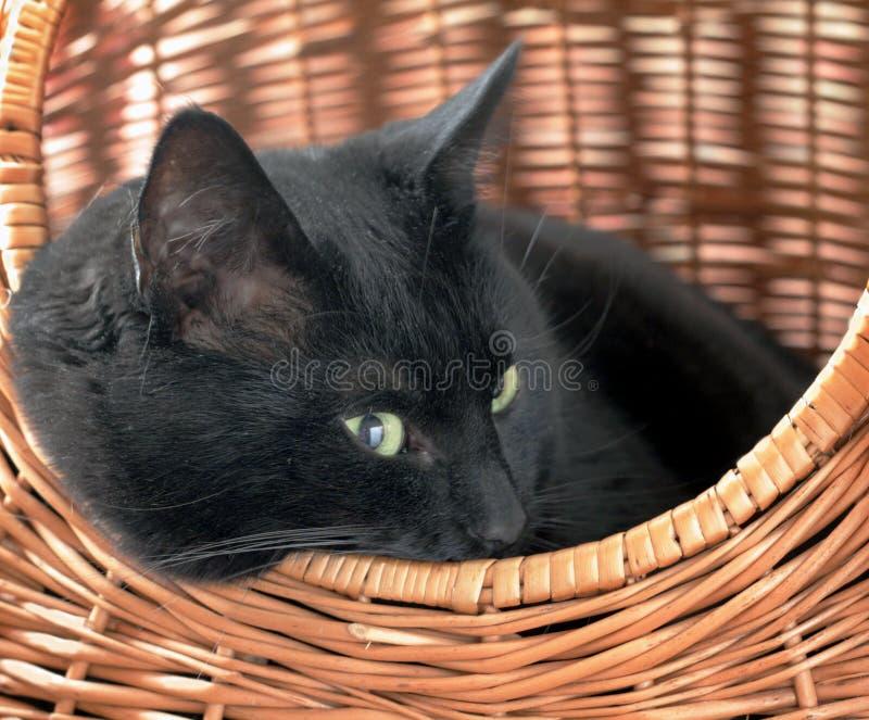 Katze im Korb lizenzfreie stockfotos