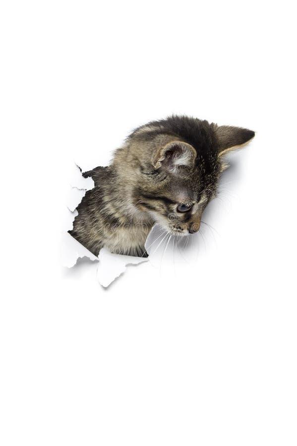 Katze im Loch lizenzfreie stockbilder