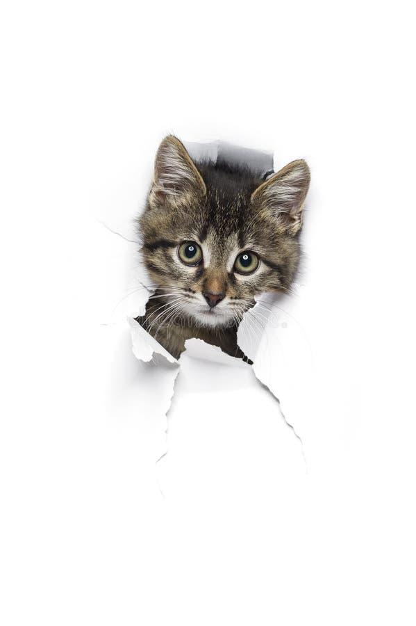 Katze im Loch des Papiers stockfotografie